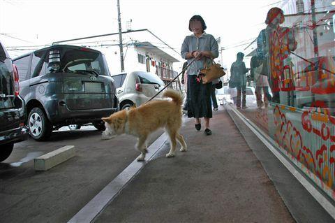 函館ワン・ニャンレスキュー譲渡会  10