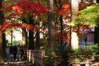 函館市 見晴公園 3